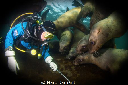 Sometimes something to distract the sea lions was enough ... by Marc Damant