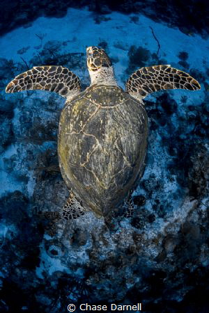 """Flight Position""