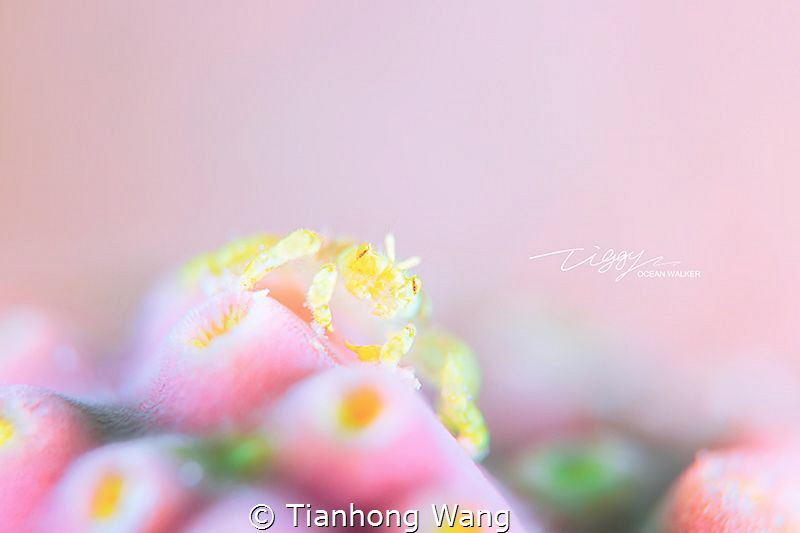 CUPCAKE