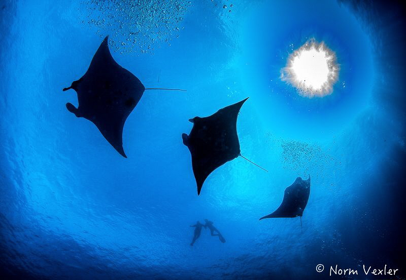 "Great day at ""Manta Sandy"" in Raja Ampat. by Norm Vexler"