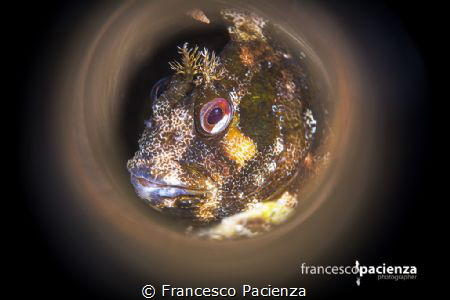 Smile blenny. by Francesco Pacienza