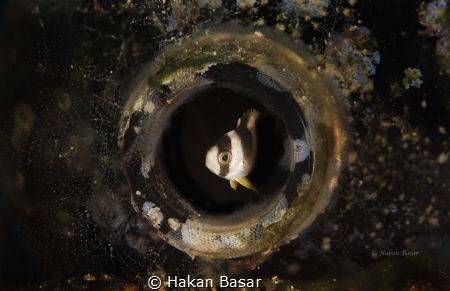 A small fish hide itself into the bottle.. by Hakan Basar