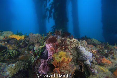 San Remo, taken at San Remo pier located Philip Island, V... by David Haintz