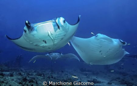 Dharavandhoo. Maldives