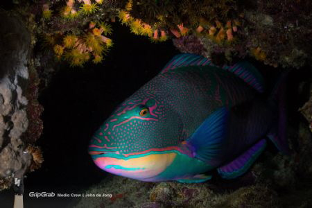 Sleeping beauty during a nightdive on the housereef of Po... by John De Jong