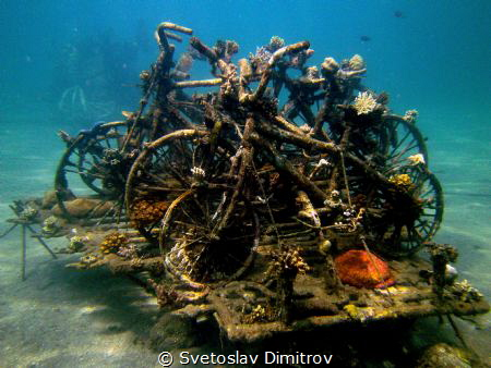 This is part of the Bio Rock Project in Pemuteran, Bali. ... by Svetoslav Dimitrov