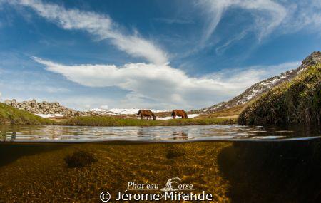 Plateau du Coscione Corse by Jérome Mirande