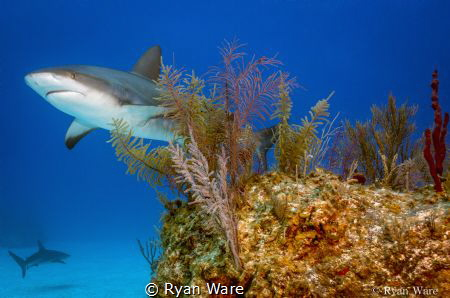 checking out the reef and looked up at the right time. by Ryan Ware