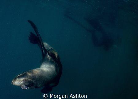 Sea Lion Cub off San Diego giving me the upside-down eye. by Morgan Ashton