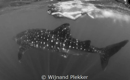 Swimming with the giant by Wijnand Plekker