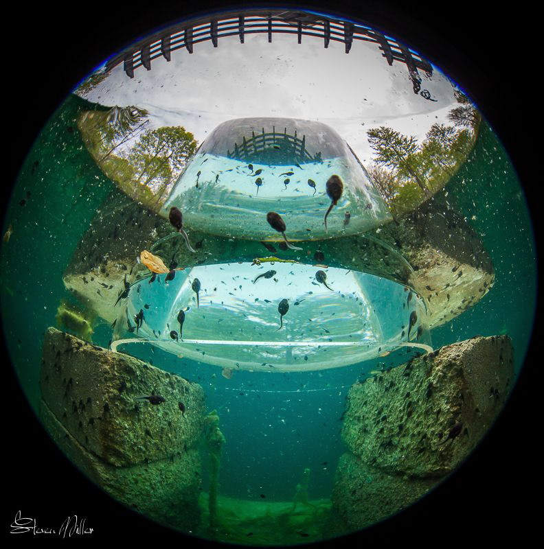 Dome port theory.. upside down aquarium for the tadpoles ... by Steven Miller