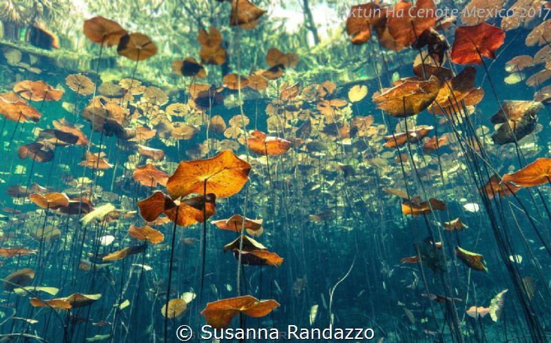 cenote Aktun Ha by Susanna Randazzo
