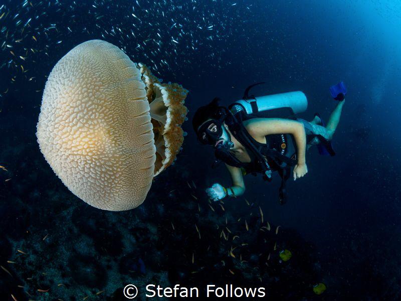 JellyMan  Jellyfish - Thysanostoma thysanura  Sail Ro... by Stefan Follows