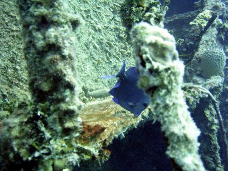 Wreck dive at Roatan July 2003 using a Caplio RR 30. by Bonnie Conley