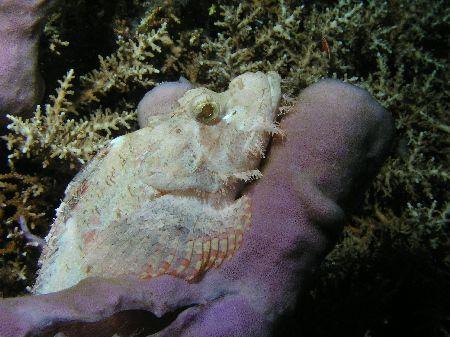 """White Scorpion"" The Tube Sponge that the Scorpion Fish w... by Damien Preston"