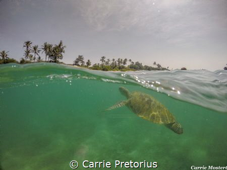 """Close to shore""