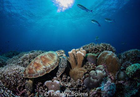 Serene Reef Scene by Henley Spiers