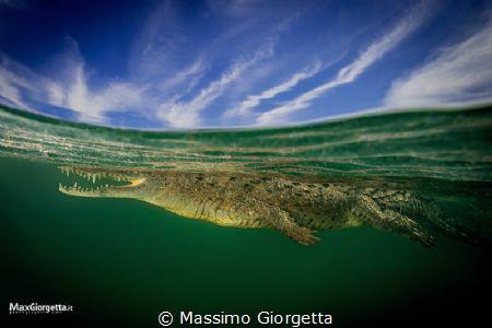 the crocodile by Massimo Giorgetta