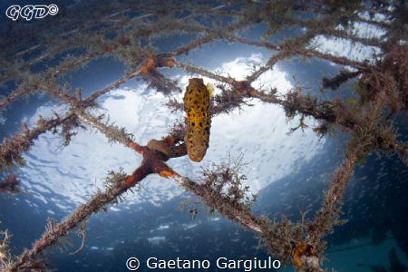She fell for the sea-horse in my dome by Gaetano Gargiulo