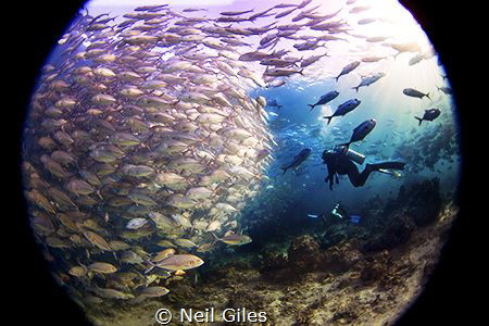 Jacks - This was taken in Sipadan in the Celebes Sea. It ... by Neil Giles