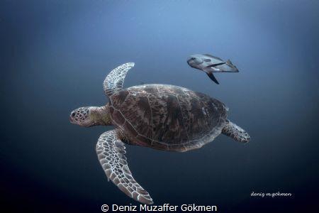 I am a fredom in Sipadan Island by Deniz Muzaffer Gökmen
