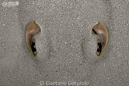 Hey!!!! watch your fins!!! by Gaetano Gargiulo
