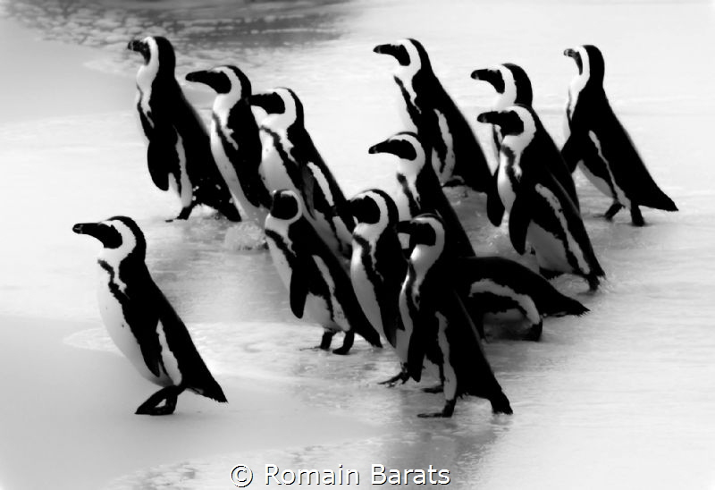 black and white stripes army by Romain Barats