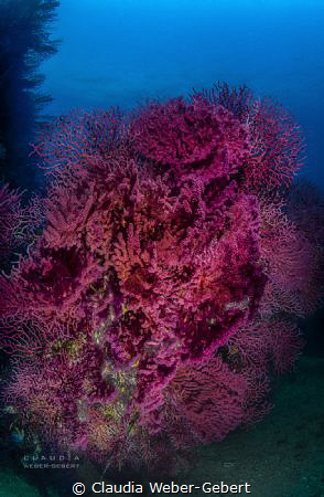 50 shades of RED .........