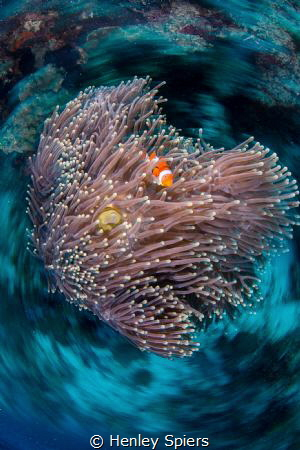 Spinning Anemone by Henley Spiers