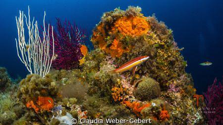 mediterranean underwater landscape by Claudia Weber-Gebert