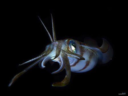 Squid by Alex Permiakov