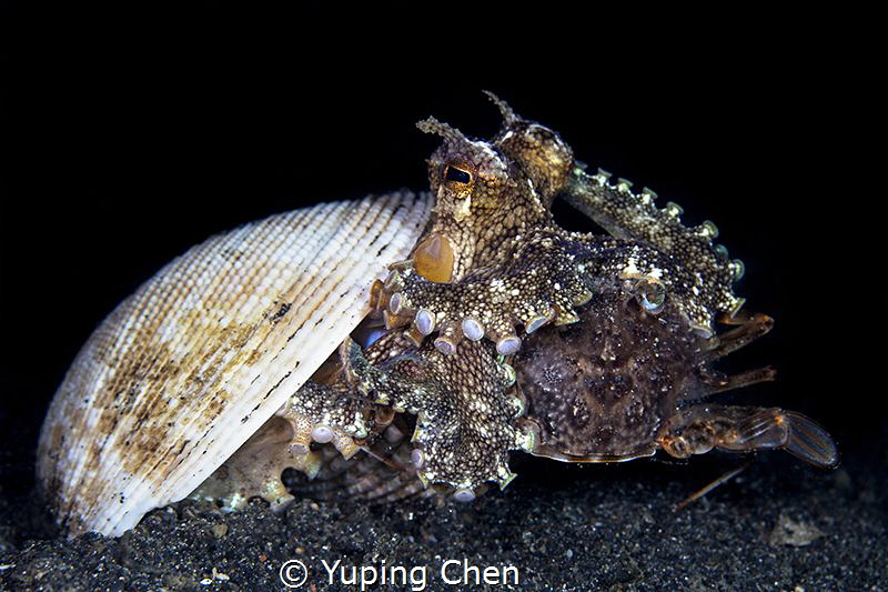 The Big Dinner//Lembeh strait, Indonesia, Canon 5D MarkII... by Yuping Chen