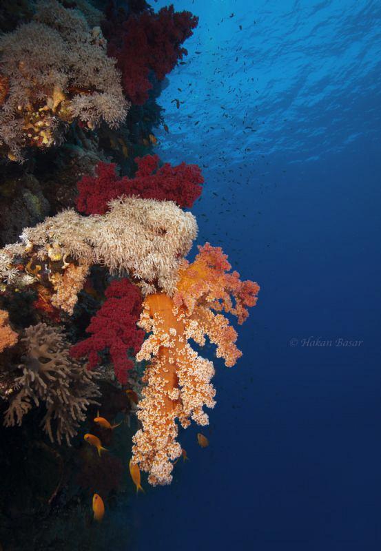 St.John Reef @ Redsea by Hakan Basar