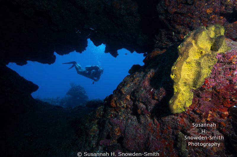 A diver explores a colorful swim through at Cinderella's ... by Susannah H. Snowden-Smith
