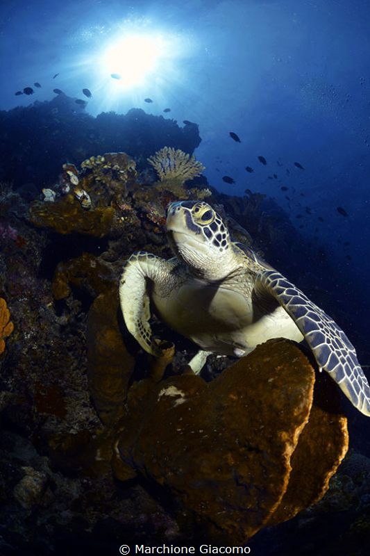 Turtle on sponge