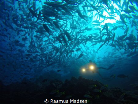 Loads of jack fish around Dirty Rock. by Rasmus Madsen