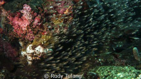 i am small by Rudy Tulang