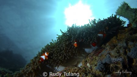 sunbathing nemo by Rudy Tulang