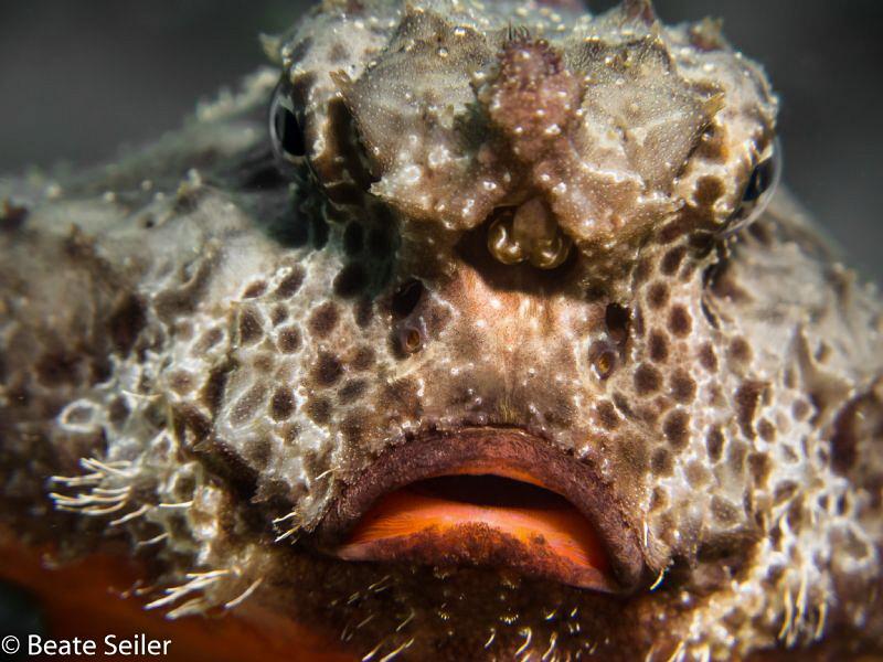 Sad fish face, taken at Blue Heron Bridge by Beate Seiler