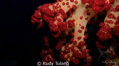soft & red by Rudy Tulang