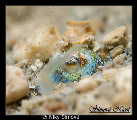 Sepiola eye, Buried in the sand by Niky Šímová
