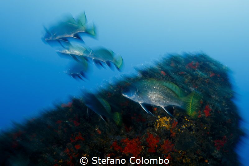 The group of fish in motion by Stefano Colombo