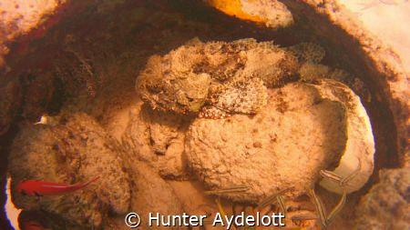 This was taken Shore Diving at Porto Mari Beach. Great pl... by Hunter Aydelott