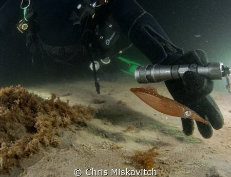 Night Dive off the coast of New England...Divers shine th... by Chris Miskavitch