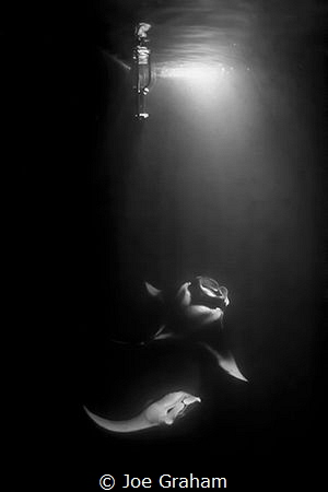 Mantas playing under the boat. Shot using the light from ... by Joe Graham
