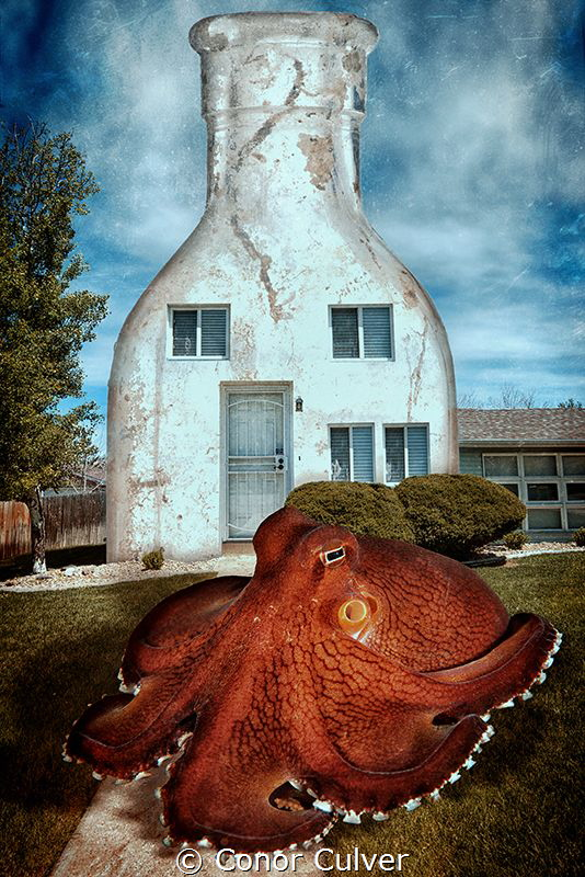 """Coconut Octopus House"" the coconut octopus often uses bo... by Conor Culver"