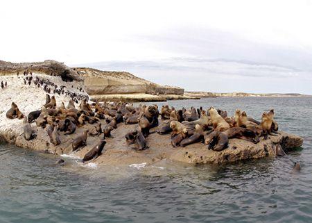 Seals, Patagonia - Puerto Pirámides by Ralf Levc