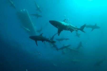 Just before the sardine run we came across this pack of a... by Roger Horrocks