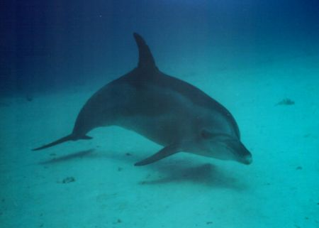 hover, while teaching students to hover a dolphin came by... by David Thompson