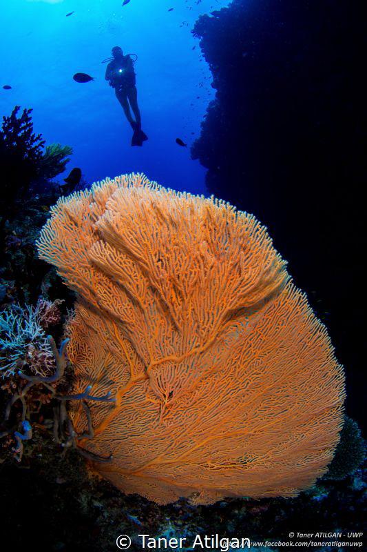 Blue & orange by Taner Atilgan